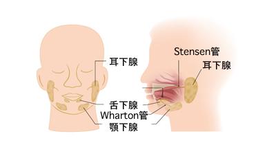 耳下腺腫瘍